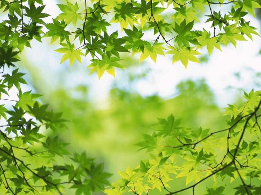 hijau-daun